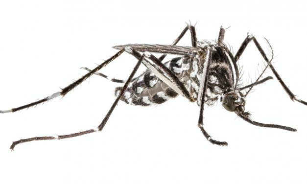 The Asian Tiger Mosquito is the Latest Threat to the Southern California Dream