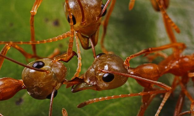 Global Empires and Devastating Warfare: The Realm of Ants