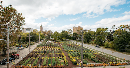 Picture of urban farm in detroit with blue sky and surrounded by trees. City buildings visible in background