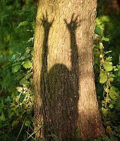 Raising Hands on Tree Shadow